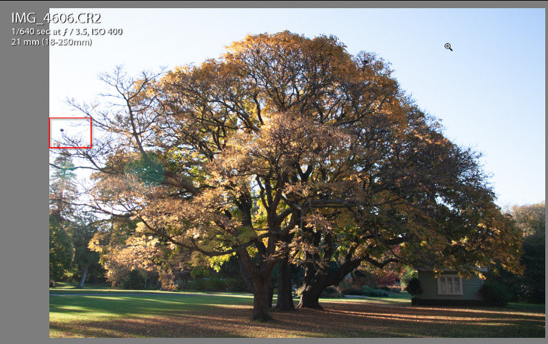 Botanical Garden Tree, Christchurch, New Zealand-with Chromatic Aberration lens issue
