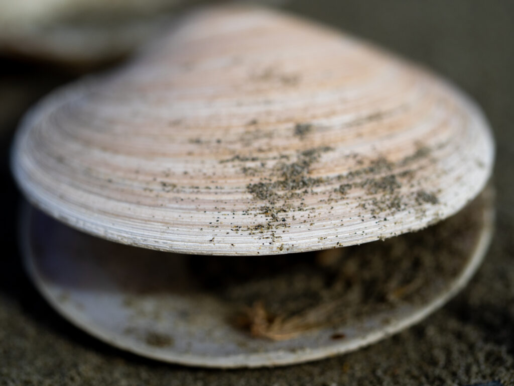 An image of a shell with a shallow depth of focus